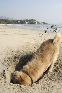 Dog sand hole