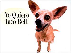 Gidget Taco Bell