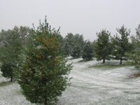 Snow Oct 10