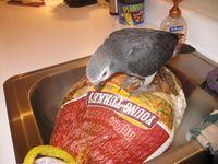 Kizzy Turkey