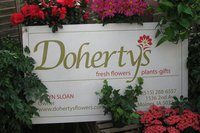 Dohertys card