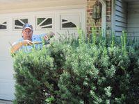 Monster Bush Aug 2010