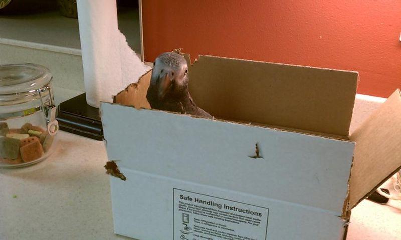 Kizzy Box