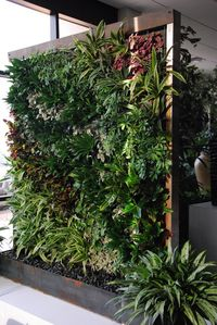 Growing-up -Vertical Wall from Plant Solutions WEB