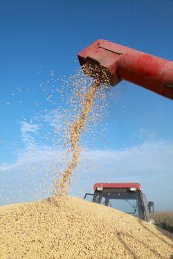 Ag Soybean Harvest