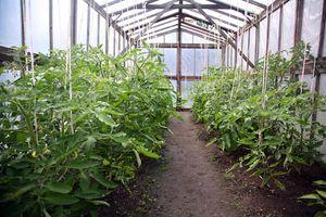 Small Farm Greenhouse