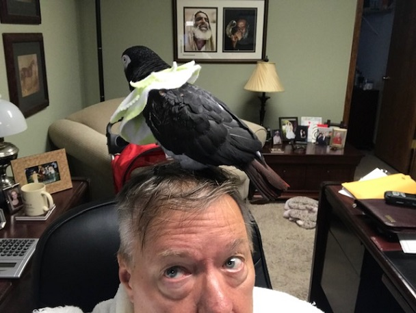 Kizzy Bird Head July 2020 v2