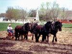 Lhf_horse_plow