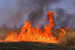 Field_fire_2